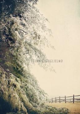Evergreen Ice