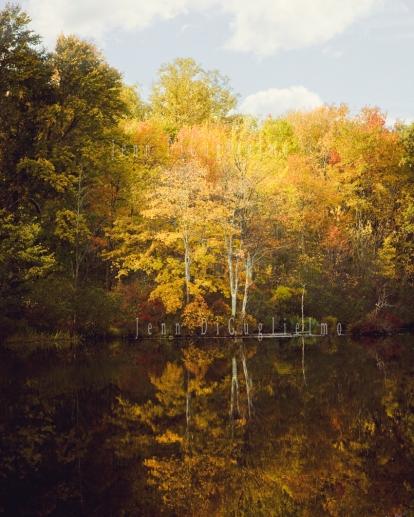 Fall pond