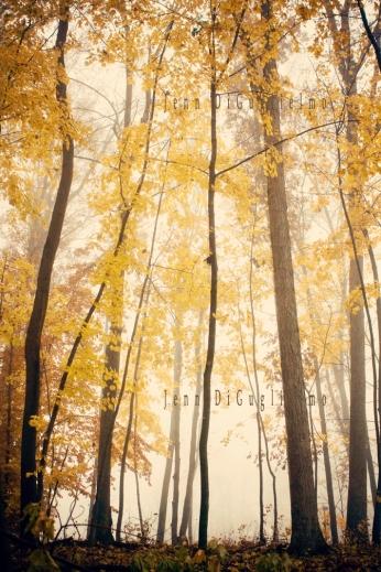 Fall tall trees