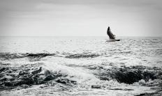 Ocean bw RI