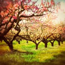 Orchard12x12