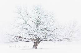 Blizzardous