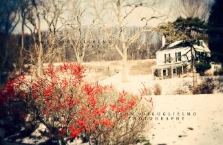 Snow house berries