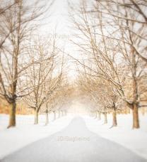 snowy drive2