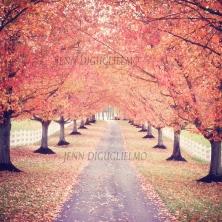 Springton Autumn 12x12