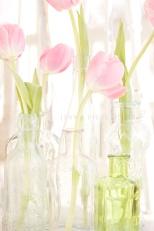 tulips-092 - Copy