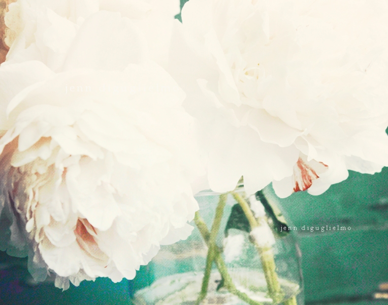 white-peonies-dark